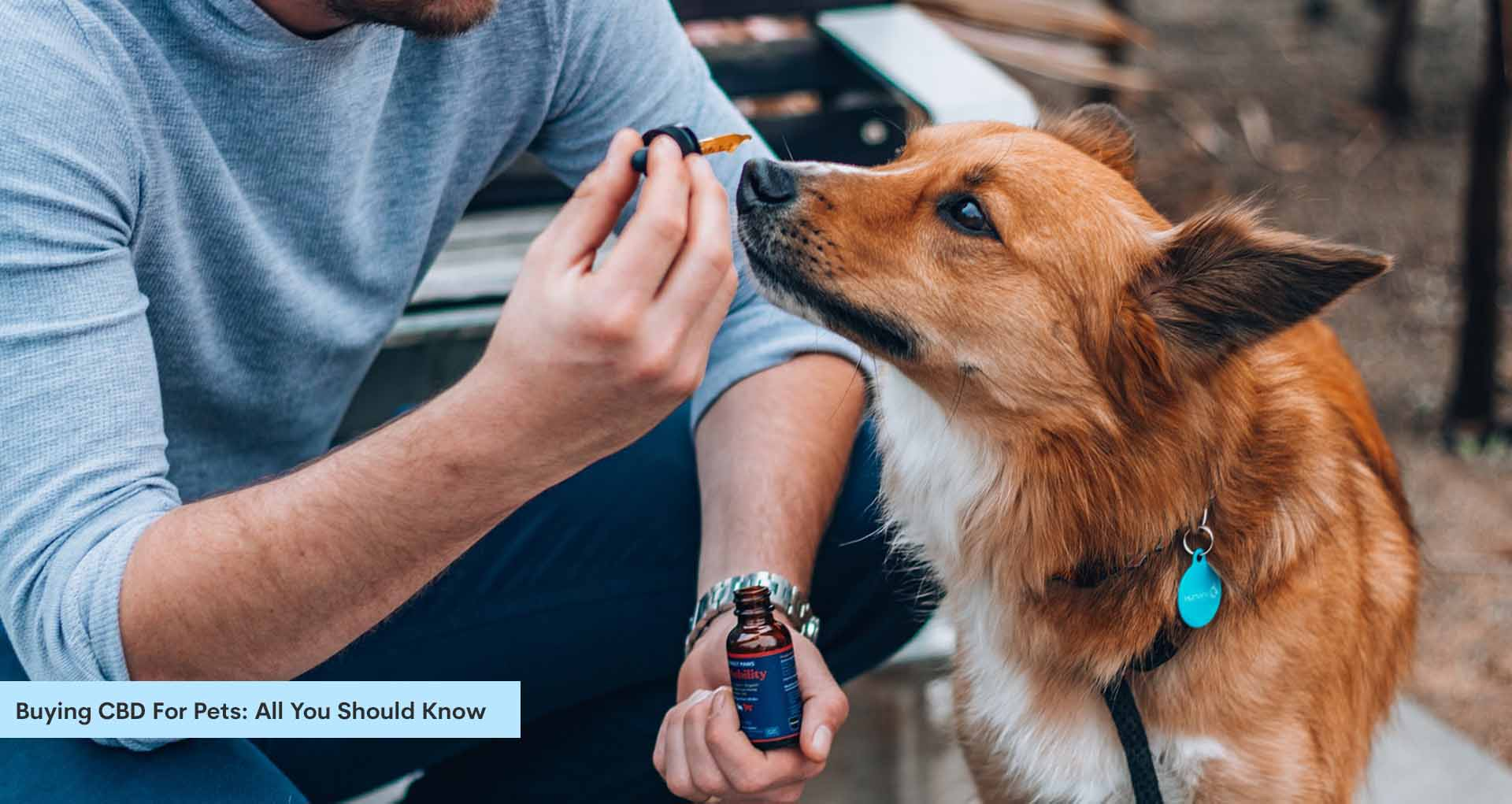 Buying CBD For Pets: All You Should Know